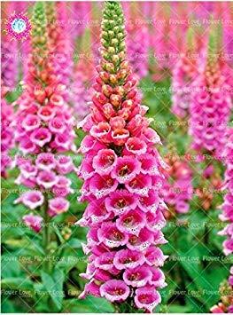 Vista 100 STÜCKE Seltene Farben Stile Fritillaria Fingerhut Digitalis Samen Bonsai Blumensamen Mehrjährige Hof Pflanze Dekoration Garten