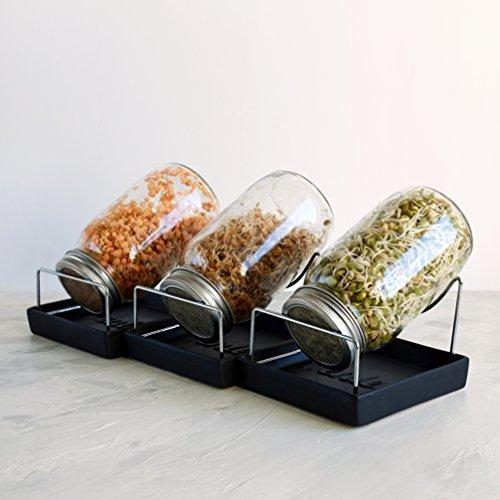 Kenley Samen Sprouter Kit – 3 Sprossen Mason Jars mit Edelstahl Sieb Deckel – Keimset zum Anbau Ihrer eigenen Sprossen Alfalfa Brocolli Bohnen Salat