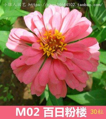 Jours de fleurs de plantes en pot graines de fleurs livraison gratuite facile à planter des fleurs de semis saisons balcon intérieur charnu 10 graines