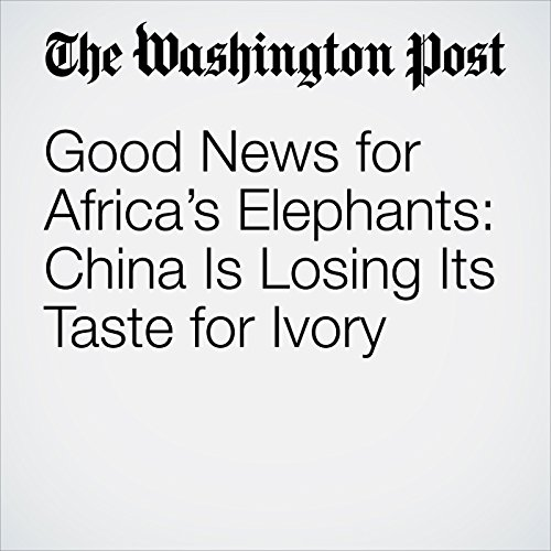 Good News for Africa's Elephants: China Is Losing Its Taste for Ivory copertina