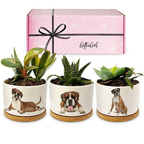 Dog-Themed Succulent Pots