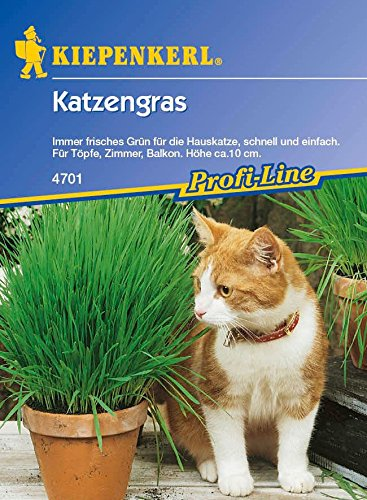 Kiepenkerl 4703 Katzengras (Katzengrassamen)