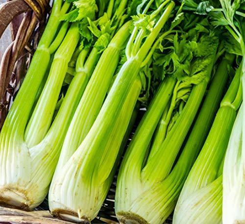 Sweet Yards Seed Co. Organic Celery Seeds 'Tall...
