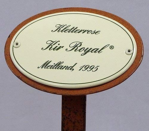 Rosenschild, Rosenstecker Emaille, Kletterrose: Kir Royal, Meilland 1995