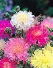 Best centaurea moschata imperialis Reviews