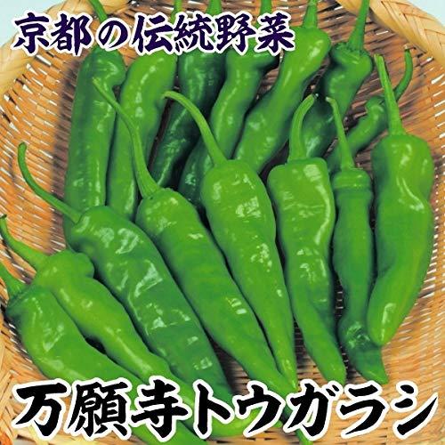 国華園 種 野菜たね トウガラシ 万願寺トウガラシ 1袋(3ml)/メール便配送 21年春商品