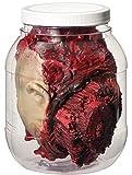 Forum Novelties 53282 Standard Head in Laboratory Jar Party Supplies, One Size, Multicolor
