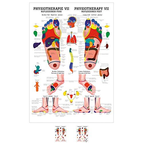 Sport-Tec Reflexzonen Fuss Mini-Poster Anatomie 34x24 cm medizinische Lehrmittel