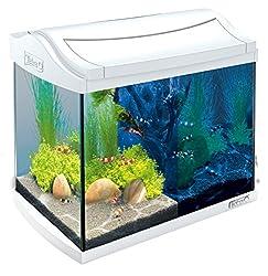Kosten goldfisch