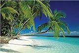 Beaches - Malediven, Palme - Beach Poster Foto Strand