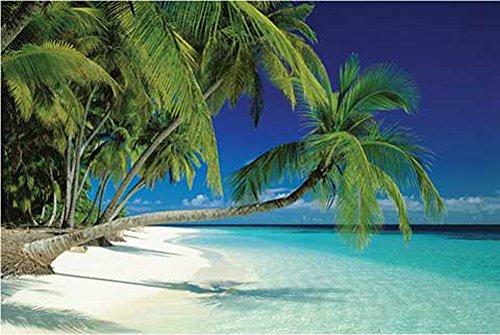 Beaches - Malediven, Palme - Beach Poster Foto Strand Palmen Meer Paradies - Grösse 91,5x61 cm