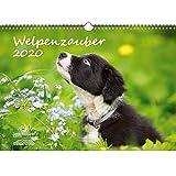 Welpenzauber DIN A3 Kalender 2020 Hunde Welpen - Seelenzauber -