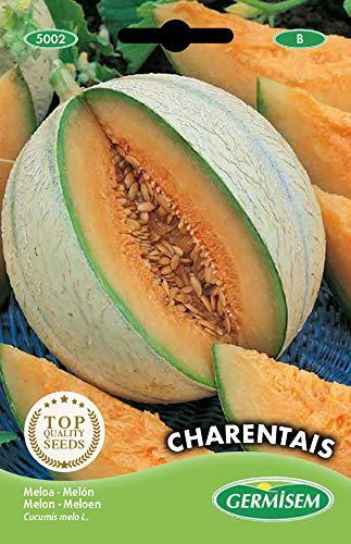 Germisem Melone CHARENTAIS