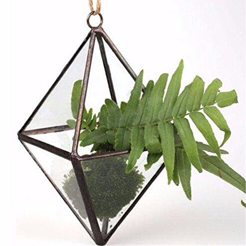 EgBert DIY Micro Paesaggio Prismatico Serra Vetro Terrario Piante Succulente Vaso di Fiori
