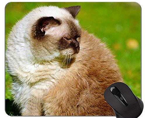 Alfombrillas de ratón, Britt British Shorthair Cat Pets Animales Alfombrillas de ratón Personalizadas, Alfombrilla de Gato con Borde Cosido