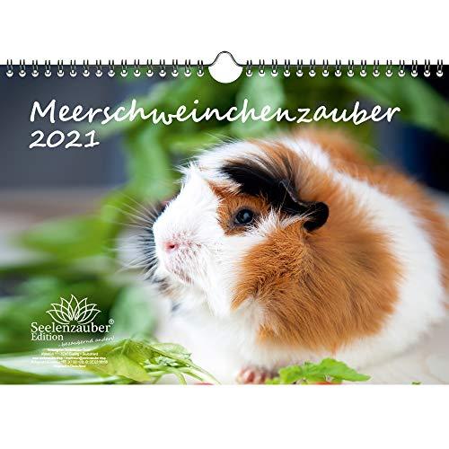 Meerschweinchenzauber DIN A4 Kalender für 2021 Meerschweinchen - Seelenzauber