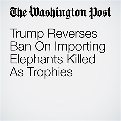 Trump Reverses Ban On Importing Elephants Killed As Trophies copertina