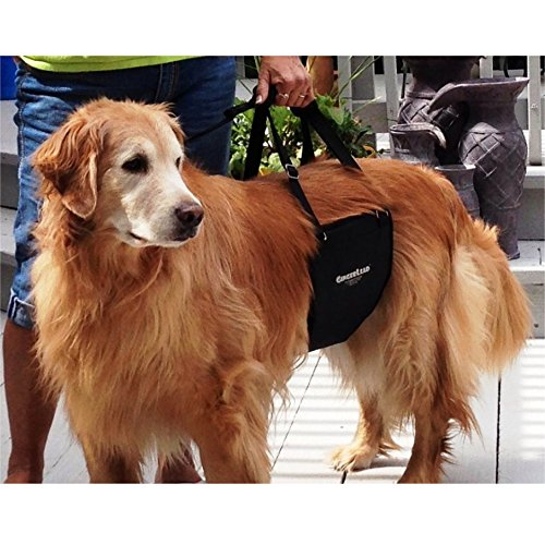 GingerLead Dog Support & Rehabilitation Harness with Stay on Straps: Medium/Large Dog Sling; Helps Older, Disabled or Injured Dogs Walk. Fits Medium Male and Female Dogs and Large Male Dogs