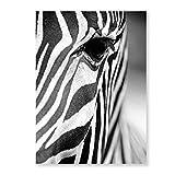 Pinturas en Lienzo de Cebra Posters de Animales Salvajes africanos Impresiones artísticas en Blanco y Negro Cuadros en Lienzo para la decoración Salon A1 60x84cm Sin Marco