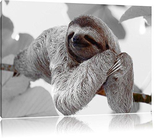 Pixxprint schönes Faultier hängt von AST als Leinwandbild | Größe: 100x70 cm | Wandbild | Kunstdruck | fertig bespannt