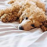 Vital Ohrenpflege Tücher 120 Stück Hundeohrtücher reinigt und pflegt die Hundeohren getränkt mit einem Ohrenreiniger und Pflegestoff , beugen sie dem Ohrenzwang beim Hund vor - 2