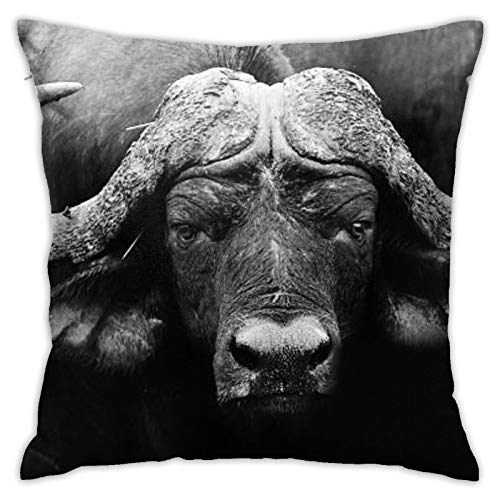 wteqofy Buffalo,Pillow Cover Friends Throw Pillow Cover Cushion Covers Pillow Case for Home Sofa Bedroom Decor 18inch*18inch