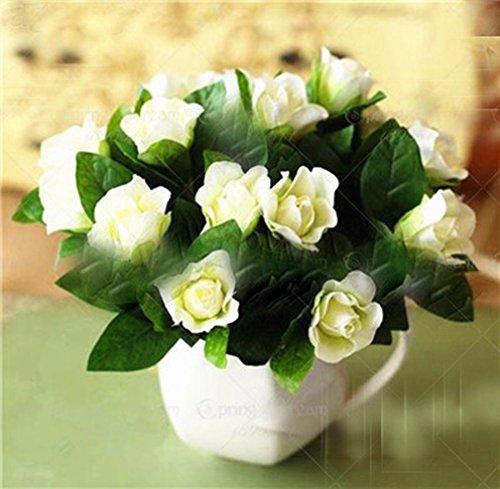 100 pcs/Bag Gardenia Seeds (Cape Jasmine) Amazing Smell & Beautiful Flower Seeds Tree Seeds for Home Garden Plant