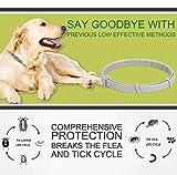 IMG-1 collare antipulci cane regolabile impermeabile
