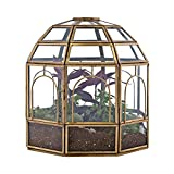 Urban Born Birdcage Large Glass Terrarium — 10' x 9' x 9' (Brass)