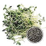 Samen für die Anzucht von Sprossen, Keimlingen, Grünkraut, Mikrogrün, Microgreens Gesunde und frische Ernährung durch eigene Sprossenanzucht, entdecken Sie unser umfangreiches Sortiment Das knackige Grünkraut verfeinert Smoothies, rohe Suppen, Salate...