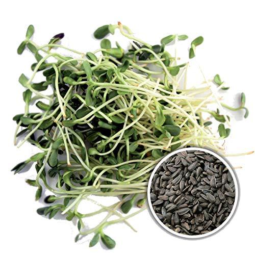 250 g BIO Keimsprossen Sonnenblume Samen für die Sprossenanzucht Sprossen Microgreen Mikrogrün