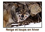 Neige et loups en hiver (Livre poster DIN A3 horizontal):