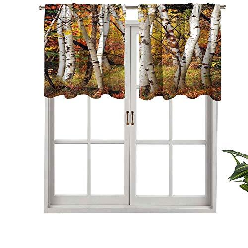 Hiiiman Cenefa de cortina con bolsillo para barra, color blanco, árboles de abedul con hojas de otoño crecimiento, juego de 2, 106,7 x 91,4 cm para decoración de interiores