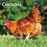 Chickens 2021 12 x 12 Inch Monthly Square Wall Calendar, Domestic Farm Animals
