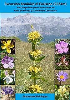 Mejor Flores Silvestres Comprar de 2020 - Mejor valorados y revisados
