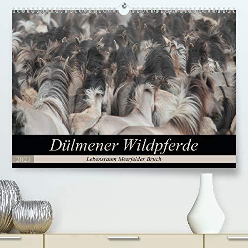 Dülmener Wildpferde - Lebensraum Meerfelder Bruch (Premium, hochwertiger DIN A2 Wandkalender 2021, Kunstdruck in Hochglanz)