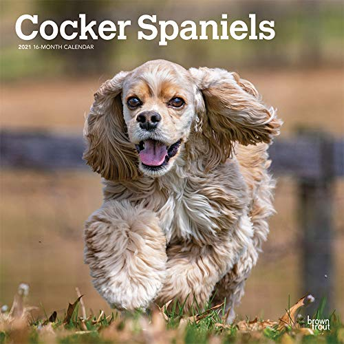 Cocker Spaniels 2021 12 x 12 Inch Monthly Square Wall Calendar, Animals Mixed Dog Breeds