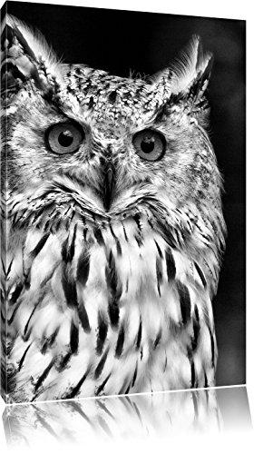 Pixxprint aufmerksame Waldohreule als Leinwandbild | Größe: 80x60 | Wandbild| Kunstdruck | fertig bespannt