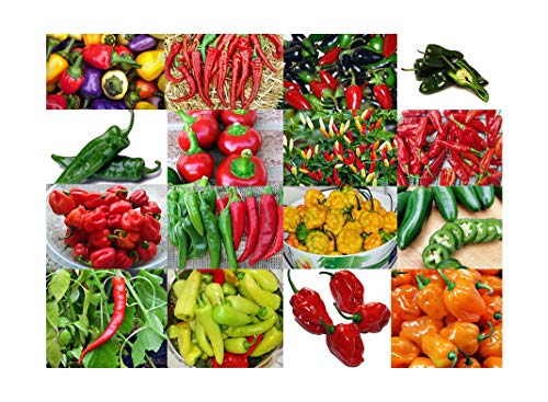 Please Read! This is A Mix!!! 30+ Hot Pepper Mix Seeds, 16 Varieties Heirloom Non-GMO Habanero, Tabasco, Jalapeno, Yellow and Red Scotch Bonnet, Ships from USA! US Grown.