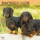 Dachshunds 2021 12 x 12 Inch Monthly Square Wall Calendar with Foil Stamped Cover, Animals Dog Breeds