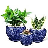 Ceramic Succulent Planter Pot