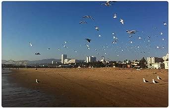 Tree26 Indoor Floor Rug/Mat (23.6 x 15.7 Inch) - Santa Monica California Bird Fly Wings Feather