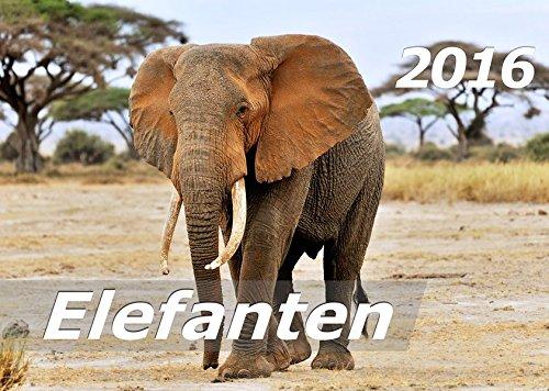 Elefanten 2016 Kalender (DIN A3): Elefantenleben in Afrika