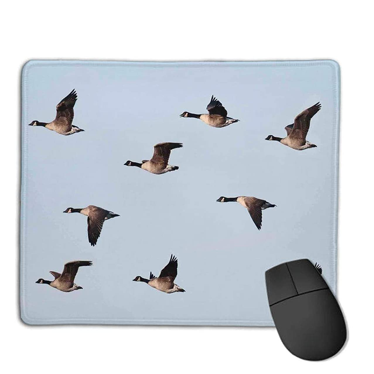 Comfortable Mouse Pad Quality Selection,Geese Decor,Canada Goose (Branta Canadensis) in Flight Clear Sky Traveling Feather Picture,Consoles More Enjoy Precise & Smooth Operating Experience,H9.8XW11.