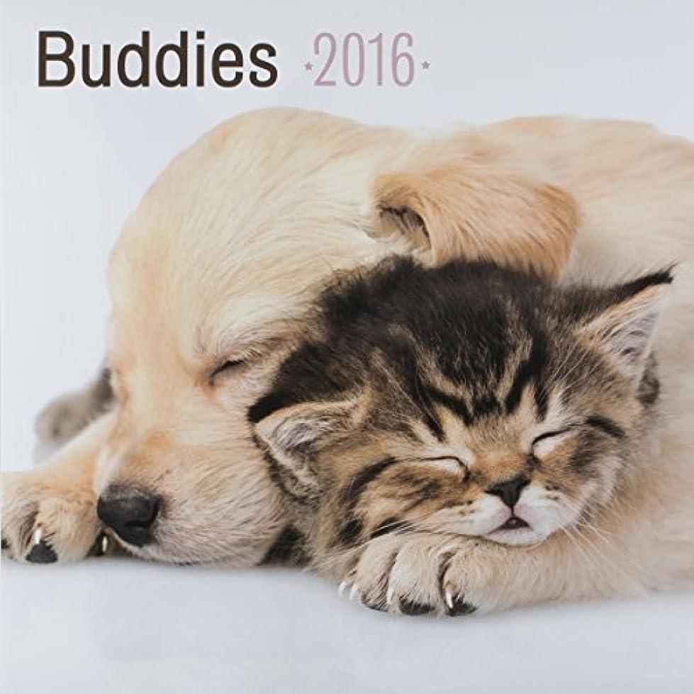 出会い写真聴くDaySpring 12 x 12 2016 12-Month Wall Calendar Good Buddies [並行輸入品]
