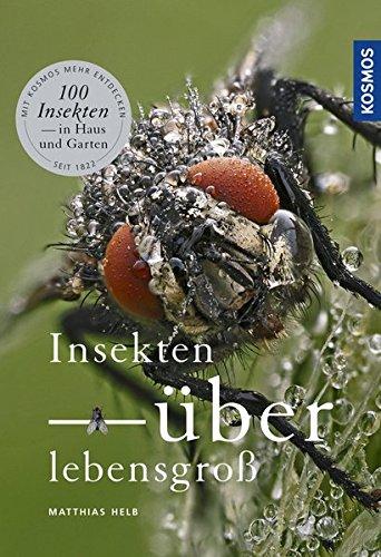 Insekten überlebensgroß: 100 Insekten - im Haus und Garten
