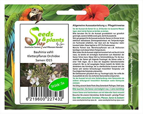 Stk - 5x Bauhinia vahli Orchidee Kletter Pflanzen - Samen ID15 - Seeds Plants Shop Samenbank Pfullingen Patrik Ipsa