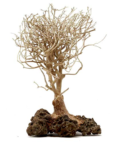 Bonsai Driftwood Aquarium Tree (5 Inch Height) Natural, Handcrafted Fish Tank Decoration | Helps Balance Water pH Levels, Stabilizes Environments | Easy to Install | BSS