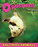 Opossums (Backyard Animals)