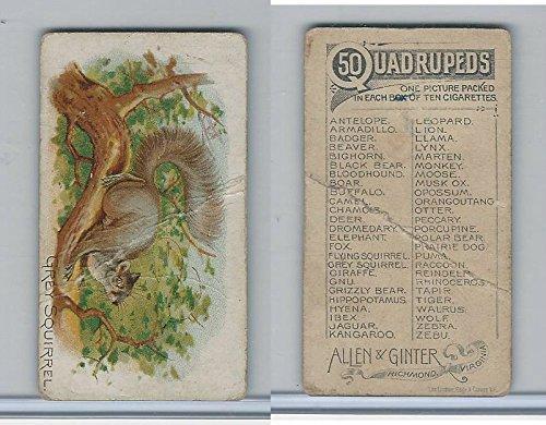 N21 Allen & Ginter, Quadrupeds, 1890, Grey Squirrel